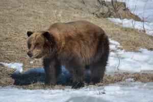 Sightseeing near Anchorage Alaska Wildlife Conservation Center