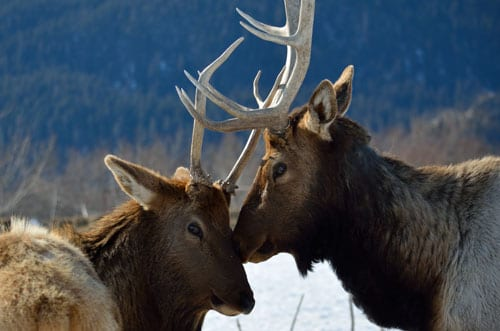 Things to do in Anchorage Alaska Wildlife Conservation Center