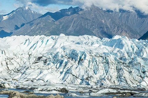 wildlife-on-Matanuska-Glacier